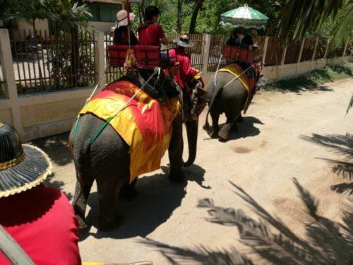 「Chang-Puak-Camp」で象に乗るトラと写真も【バンコク近郊】
