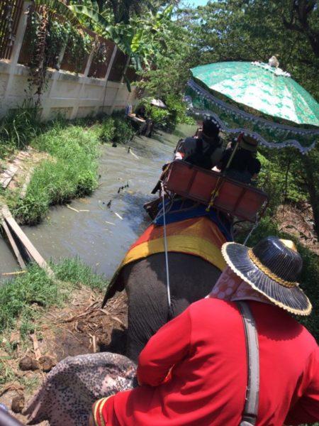 「Chang Puak Camp」で象に乗る&トラと写真も【バンコク近郊】2