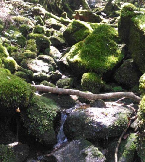 【屋久島】白谷雲水峡往復の所要時間と見どころ【登山初心者が紹介】8