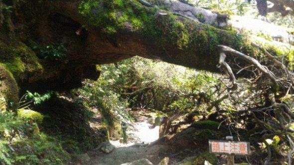 【屋久島】白谷雲水峡往復の所要時間と見どころ【登山初心者が紹介】11
