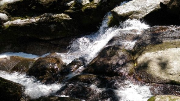 【屋久島】白谷雲水峡往復の所要時間と見どころ【登山初心者が紹介】6