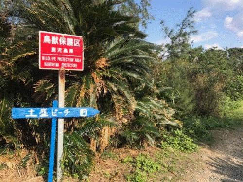 奄美大島の海といえば「土盛海岸」【奄美で一番綺麗な海】3