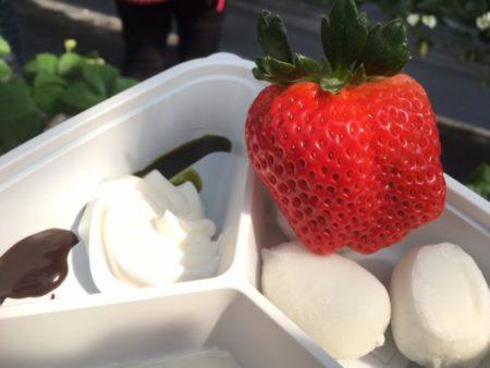 堺市北区でいちご狩りができる農園「いちごの堺」を詳しく紹介します4