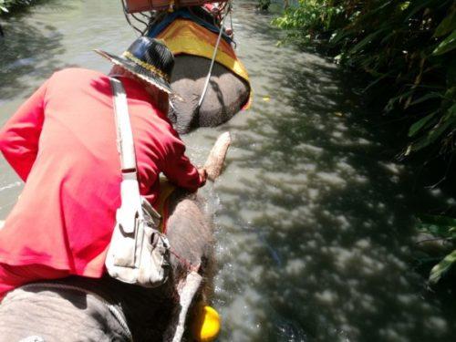 「Chang-Puak-Camp」で象に乗るトラと写真も【バンコク近郊】3