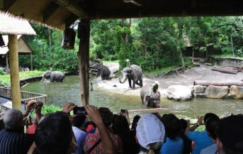 世界中の観光客が訪れるシンガポール・ズーの魅力と見どころ2