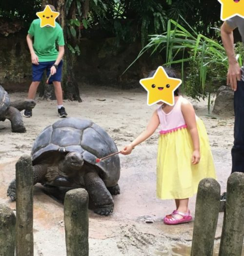 世界中の観光客が訪れるシンガポール・ズーの魅力と見どころ3