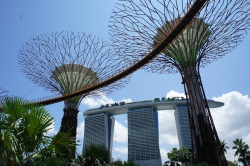ガーデンズバイザベイの魅力と見どころ【常夏シンガポールの巨大植物園】10
