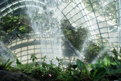 ガーデンズバイザベイの魅力と見どころ【常夏シンガポールの巨大植物園】7 (1)