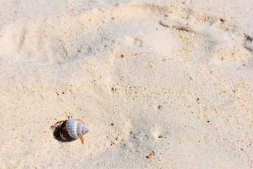 石垣島・川平湾の砂浜とやどかり