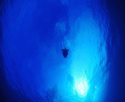 沖永良部島の体験ダイビング中に下から見たウミガメ