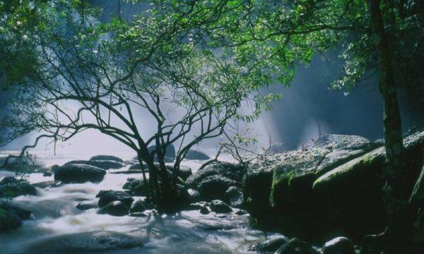 カオヤイ国立公園の楽しみ方と行き方【バンコク日帰り観光】