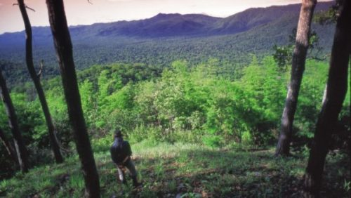 カオヤイ国立公園の楽しみ方と行き方【バンコク日帰り観光】3