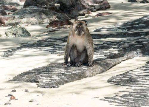 プーケットから行く絶景「ピピ島」のおすすめ観光スポット「モンキービーチ」